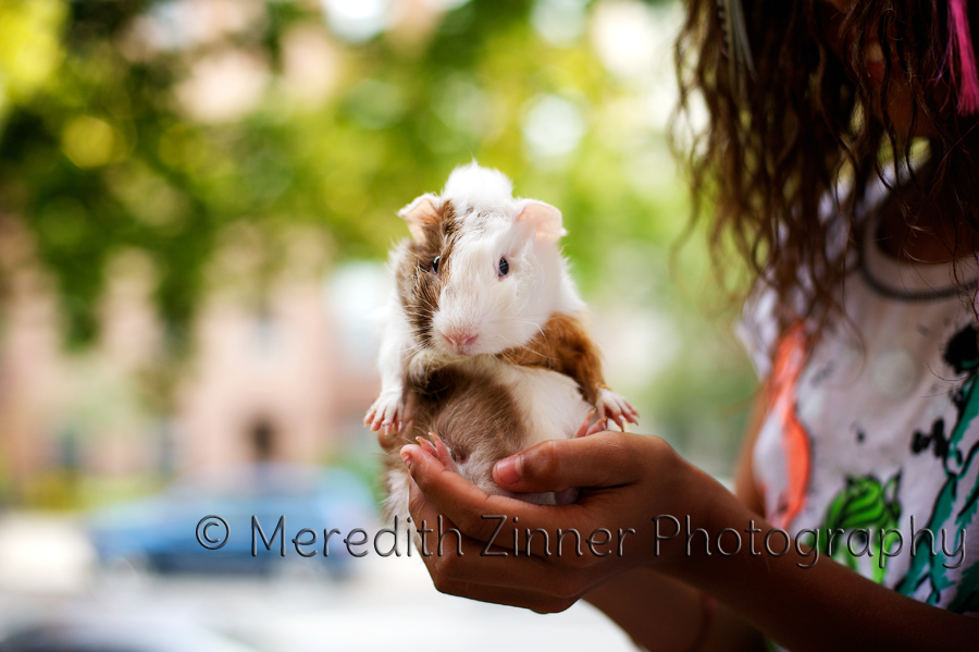 brooklyn_park_slope_pet_photographer_photography_zinner