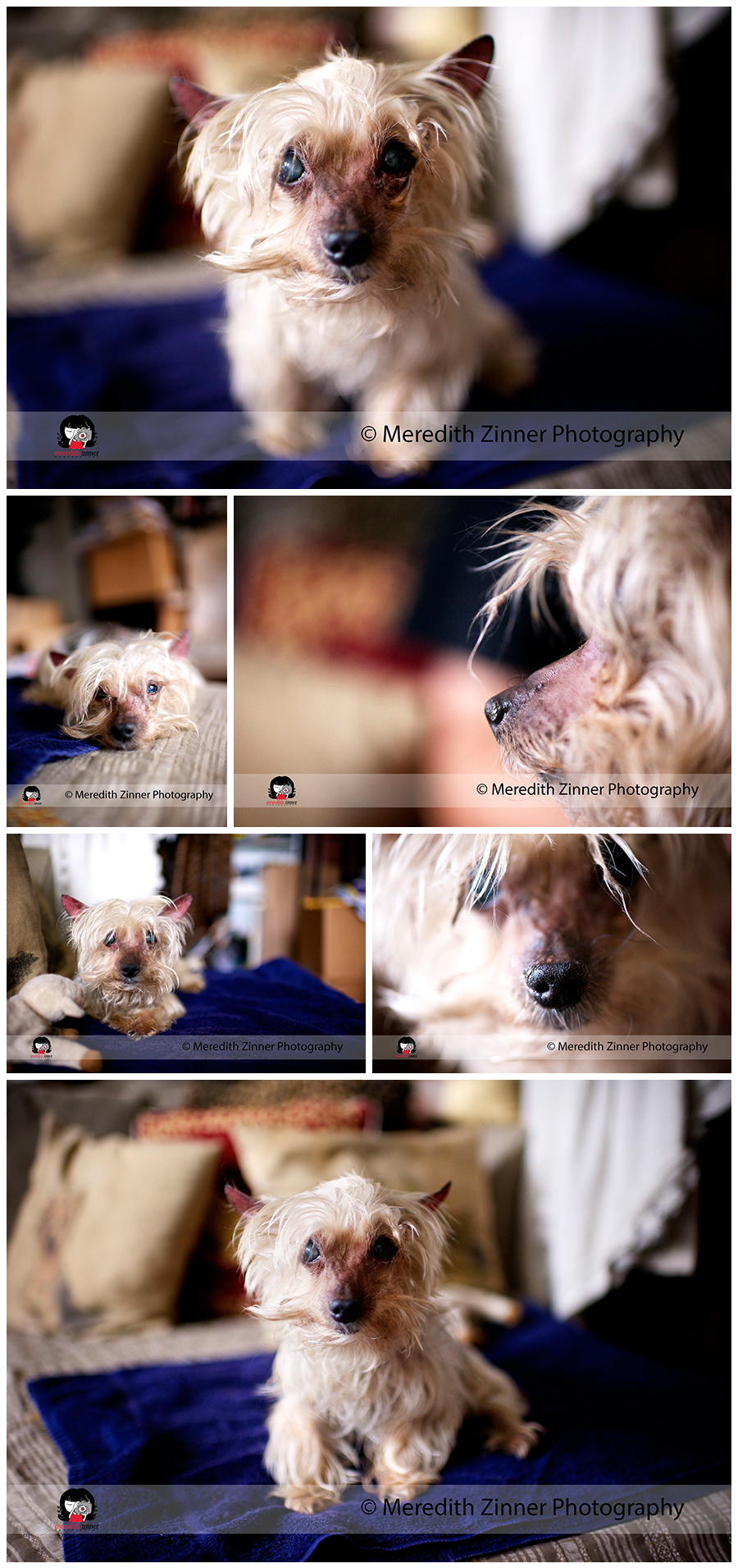 meredith_zinner_photography_dog_dogs_pet_photographer_photography_nyc_brooklyn_