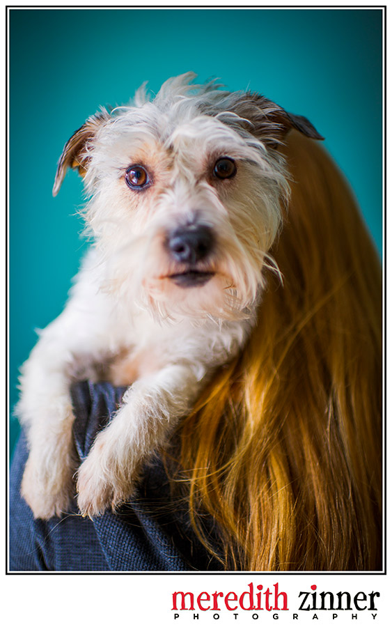 dog_pet_photography_nyc